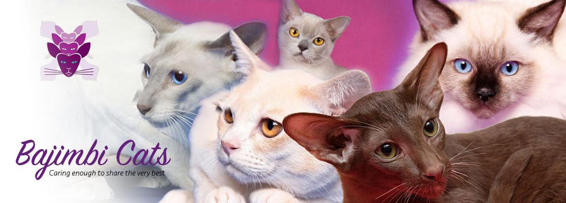 Bajimbi Cats logo