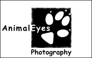 AnimalEyeslogoemail
